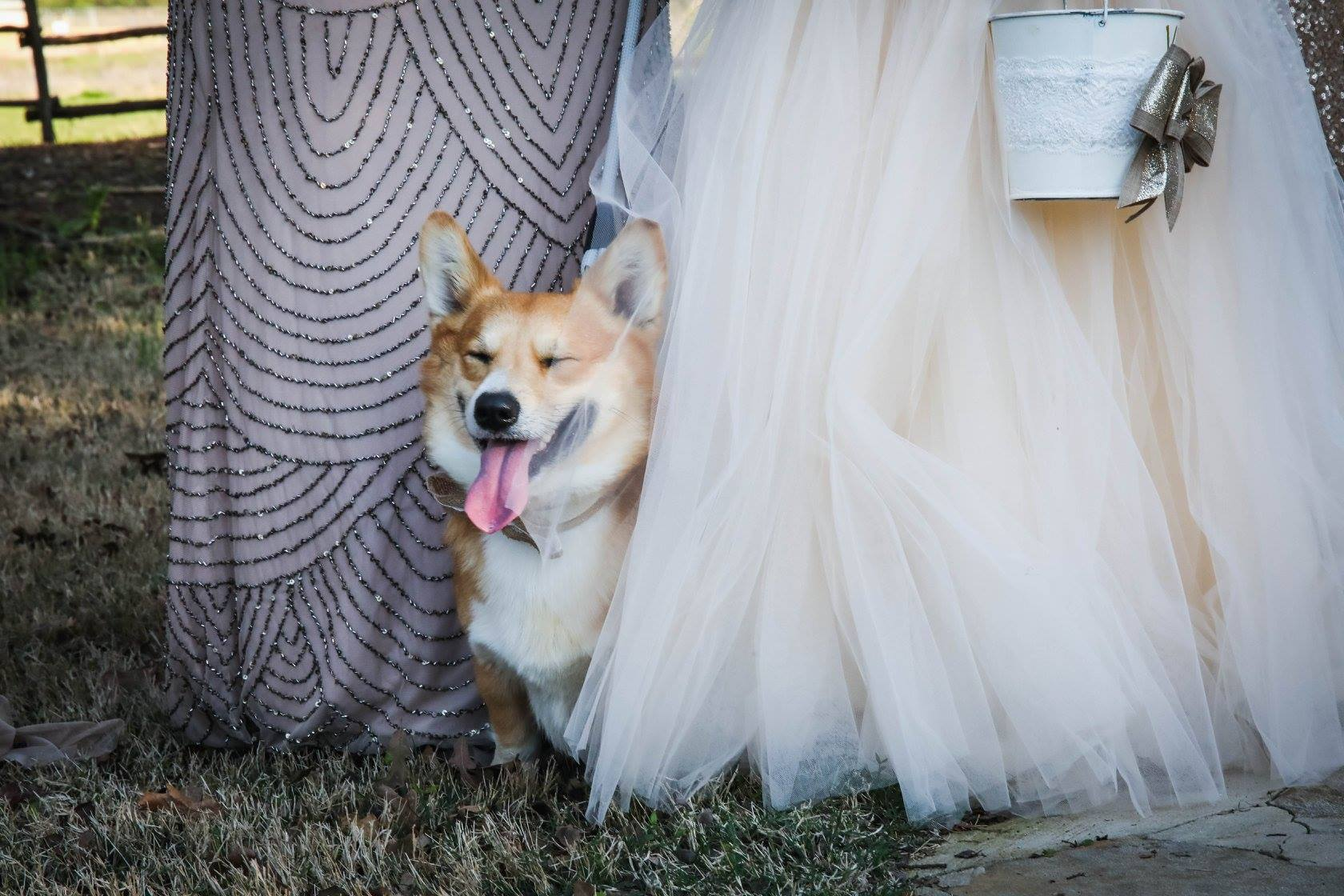 Their beloved dogs made a debut walking the isle